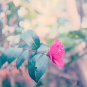花がひらくとき